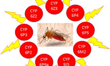 seven recombinant P450s from An. gambiae (CYPs 6M2, 6P2, 6P3, 6P4, 6P5, 9J5) and An. funestus (CYP6P9a) commonly associated with pyrethroid resistance